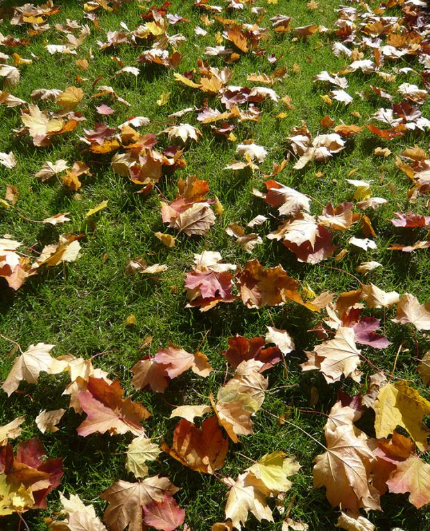 Spadané listí je okrasou celé zahrady, trávníku ale příliš neprospívá. foto: Lucie Peukertová