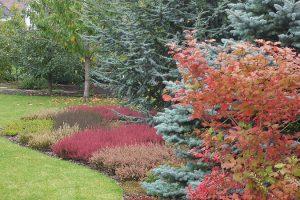 Vřesoviště na podzim. foto: Lucie Peukertová