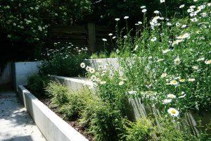 Stinná zahrada může nejednomu zahradníkovi připravit opravdu těžké chvíle, ale ipro tyto podmínky existuje řešení. Při výběru rostlin si vprvní řadě ujasněte, jaký typ stínu na vaší zahradě panuje. Je totiž obrovský rozdíl mezi stínem pod opadavými listnáči apod stálezelenými jehličnany. FOTO LUCIE PEUKERTOVÁ