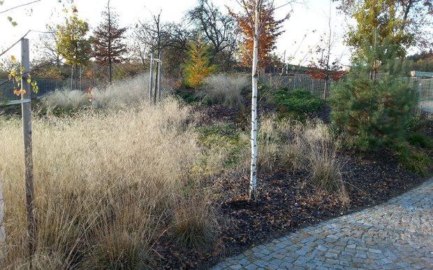 Abyste se na zahrade dockali zimniho efektu trav, nesmite je na podzim z vysadeb odstranit. foto: Lucie Peukertová