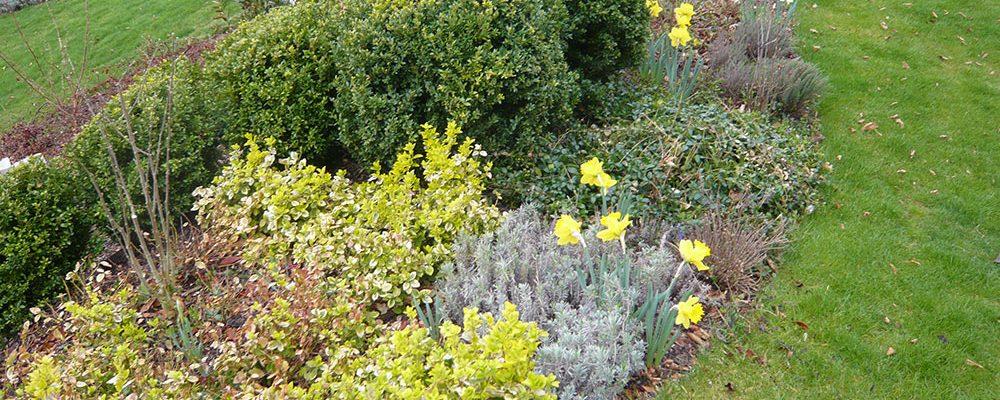 Rostliny, které rozzáří vaši zahradu i na konci sezony
