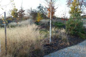 Pokud stébla okrasných trav neodstraníte už na podzim, můžete se těšit z jejich nevšední krásy až do jara. foto: Lucie Peukertová