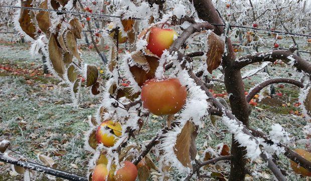 Řez ovocných dřevin není rozhodně žádný strašák!