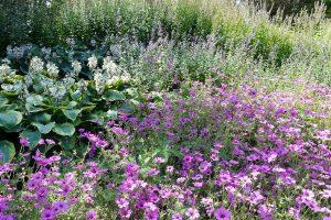 Pri navrhu trvalkoveho zahonu se muzete zamerit na sortiment, ktery se bude barevne navzajem doplnovat. foto: Lucie Peukertová
