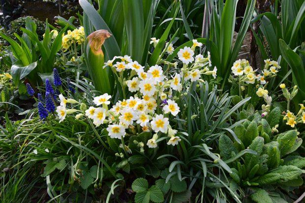 Pri plánovaní rostlin je nutné pamatovat na zastoupení trvalek kvetoucích brzy na jare. foto: Lucie Peukertová