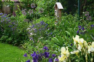 Prirodni kvetinove zahony s druhy se schopnosti samovysevu. foto: Lucie Peukertová