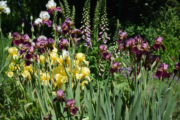 Výsadba tradičních druhu květin pro venkovské prostředí. foto: Lucie Peukertová