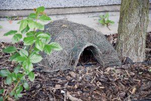 Proč je ježek užitečný? Na našem území najdete dva druhy ježků aoba dva si rádi pochutnají třeba na slimácích. Přivábit je můžete na ježčí doupě nebo úkryt zkusů dřeva prosypaných suchým listím ve skrytu koruny vzrostlého stromu. FOTO LUCIE PEUKERTOVÁ