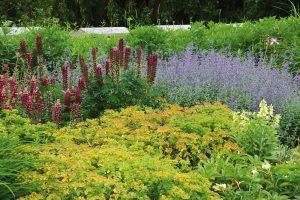 Vekologické zahradě se snažte upřednostňovat především naše domácí druhy rostlin. Pokud použijete druhy nepůvodní, rozhodně by neměly být expanzivní ašířit se nekontrolovatelně do krajiny, kde by vytlačovaly původní květenu. FOTO LUCIE PEUKERTOVÁ