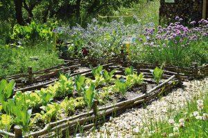 Snažte se řešit věci co nejefektivněji. Vříši rostlin najdete různé zástupce, kteří si navzájem pomohou. Skvělým sousedem jsou například jahody acibule, kopr se skvěle doplní smrkví aroketa se zase může vjednom záhonku vysadit vedle pažitky. FOTO LUCIE PEUKERTOVÁ