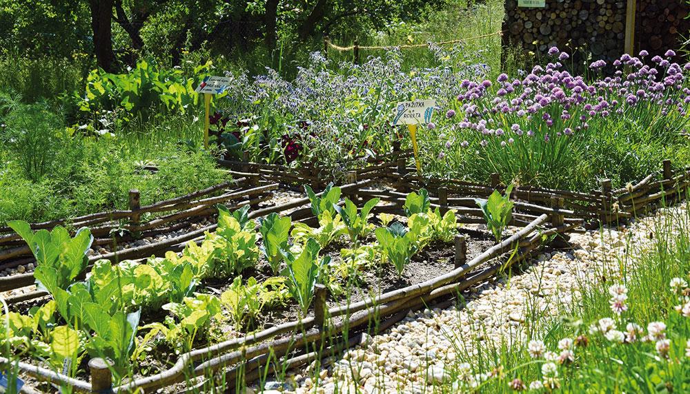 Proč se pustit do ekologického zahradničení