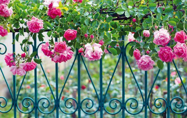 Romanticky působící kovový plot poslouží koddělení předzahrádky avstupního prostoru do domu od ulice, ovšem pro klasické ohraničení zahrady není právě nejvhodnější. Vpřípadě kovových plotů si dejte pozor na přílišné zdobení, které může působit rušivě, ba až kýčovitě. FOTO ISIFA/SHUTTERSTOCK