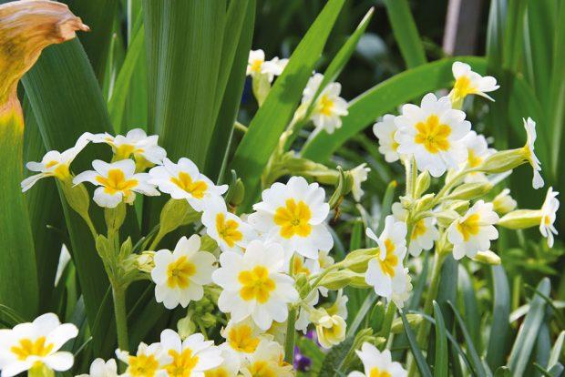 Zahrada by měla být efektní po celý rok. Při jejím plánování mají svébytné postavení také rostliny, které kvetou vpředjaří nebo pozdě na podzim. FOTO LUCIE PEUKERTOVÁ