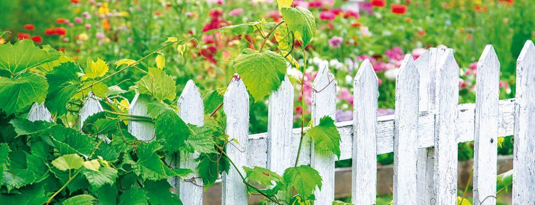 Netradiční hranice zahrad