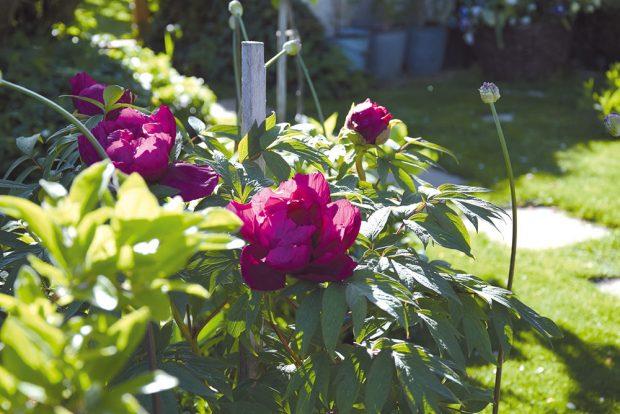 Venkovská zahrada byla vminulosti především užitková, dnes stále častěji získává punc okrasné zahrady, kde je část pozemku vyhrazena pěstebním záhonům. FOTO LUCIE PEUKERTOVÁ