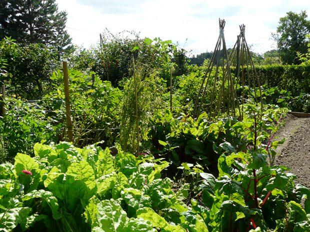 Abyste pudu zbytecne nevycerpali, pestujte zeleninu v polykulturach nebo sikovne stridejte plodiny.