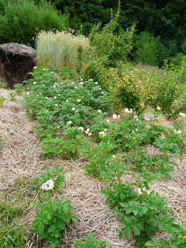 Nektere plodiny jako treba brambory lze pestovat i v alternativnich materialech. Mozna je slama, karton nebo treba listi.