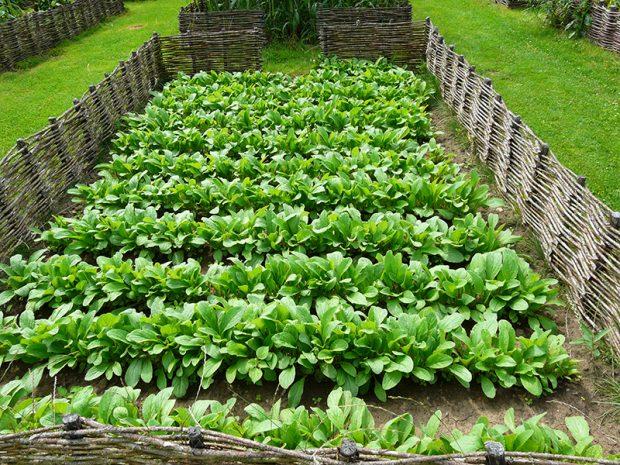 Pokud se vam po zeleninove zahrade pohybuji domaci mazlicci, muzete jim vstup do zahonu zamezit treba pomoci hati.