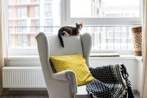 Kočku Růženku si majitelé pořídili teprve před dvěma měsíci, ale okamžitě se stala třetím členem domácnosti. FOTO NORA AJAKUB ČAPRNKOVI