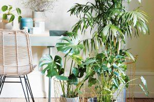 Aktuálním trendem je vytváření skupinek rostlin srůznými typy listů (různé velikosti, struktury aodstíny zelené). Rostliny ve skupince vždy vhodně výškově uspořádejte – dominantnější druhy patří do pozadí. Atraktivitu této sestavy ještě zvýrazníte, zvolíte-li netradiční vegetační nádoby. Foto Hübsch