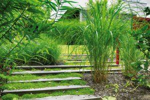 Okrasné trávy výborně zapadají do konceptu minimalistické zahrady. Nižší druhy reprezentuje kostřava či ostřice, vyšší dochan, třtina aozdobnice. FOTO ATELIER FLERA