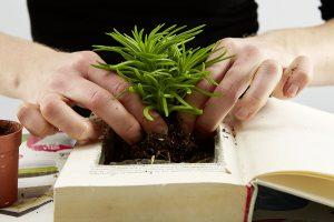 8. VYPLNENÍ OTVORU Otvor vyplníme zeminou, následně do ní vysadíme mech a rostliny. Foto: Möbelix
