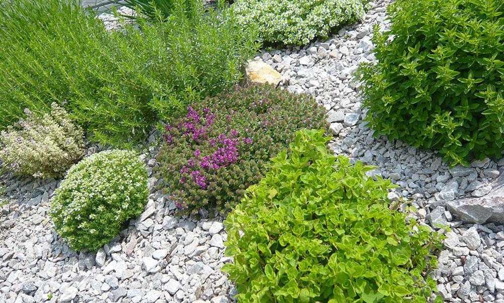 Podle čeho vybrat bylinky na vaši zahradu