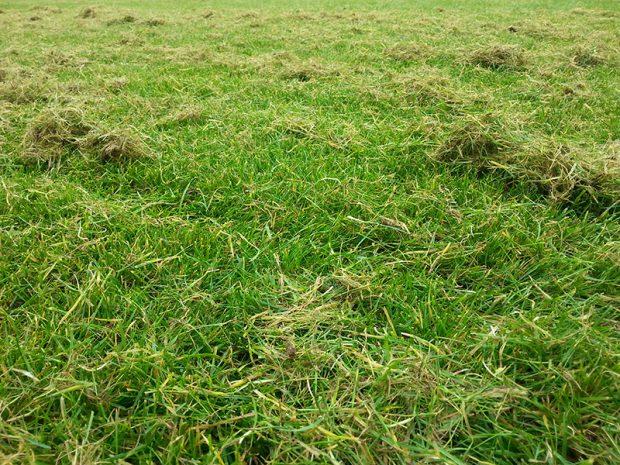 Plst z travniku odstranite pri jarni vertikutaci.