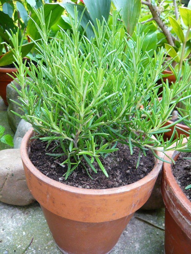 Pokud nemate na zahrade dost mista, klidne pestujte bylinky v nadobach. foto: Lucie Peuker