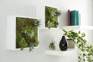 Jak z jednoduchých poliček vytvořit zahradu na stěně?