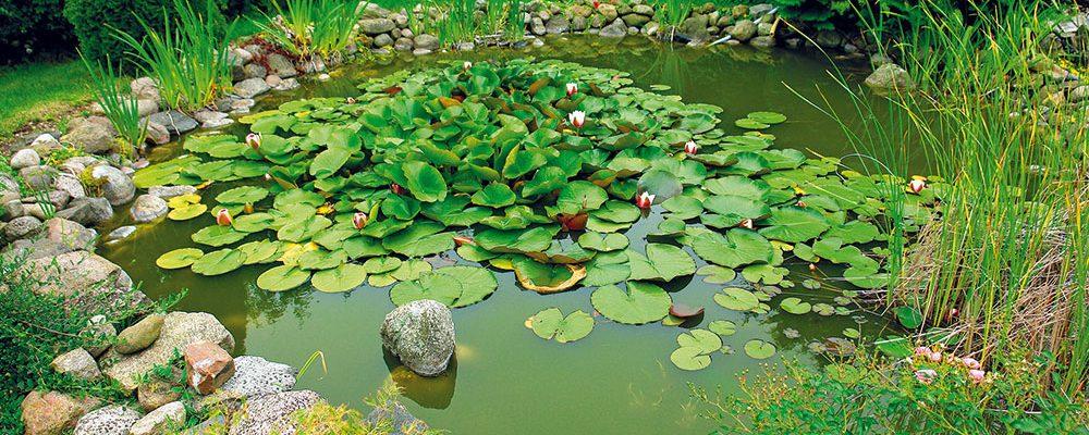 Malé a levné záhradní jezírko: Od realizace pod funkční biosystém