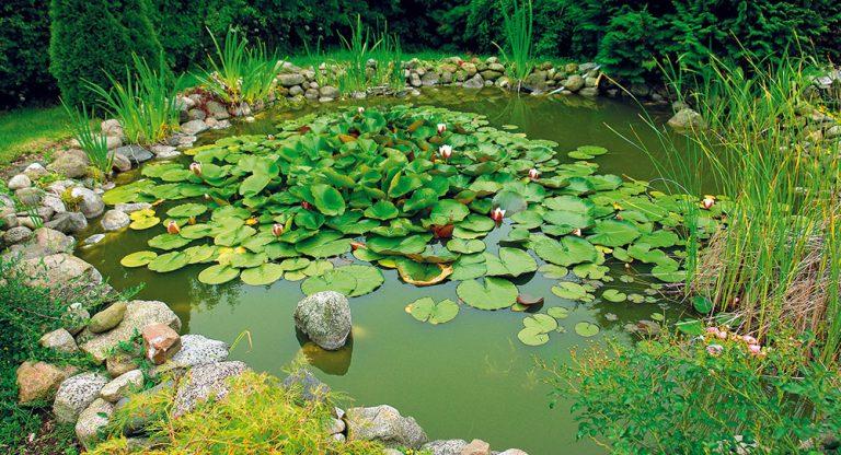 Malé a levné záhradní jezírko: Od realizace po funkční biosystém