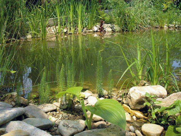 6. Péče Následující jaro seřízneme nevzhledné rostliny adosadíme nové. Zjezírka pravidelně odstraňujeme nečistoty, zejména listí. Foto Marek Pavlech