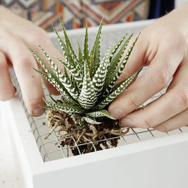 """9. """"SAZENÍ"""" Otvory nesmějí být příliš velké, aby z nich rostliny nevypadly. Všechny naše rostlinky správně uložíme.foto: Möbelix"""