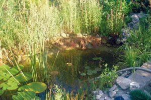 7. Vypouštění vody Jednou za čas vypustíme část vody zjezírka (využijeme ji například na zalévání zahrady) adopustíme čerstvou vodu. Foto Marek Pavlech