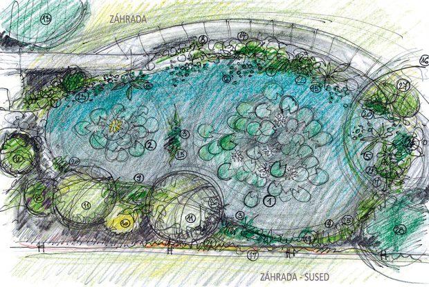 Jezírko přírodního charakteru se dvěma hloubkovými úrovněmi (1 400 a 850 mm). kresba: Marek Pavlech