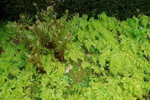 Podrostové výsadby jako náhrada za trávník