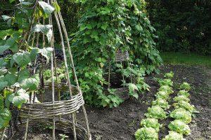 Na malé zahradě můžete některé plodiny vytáhnout do výšky například na konstrukci zproutí. FOTO LUCIE PEUKERTOVÁ