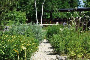 Vbylinkové zahradě mohou byt vysazeny kulturní iplané bylinky. FOTO LUCIE PEUKERTOVÁ