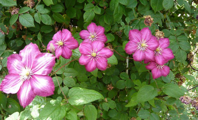 Rostliny, které do zahrady nalákají užitečné pomocníky