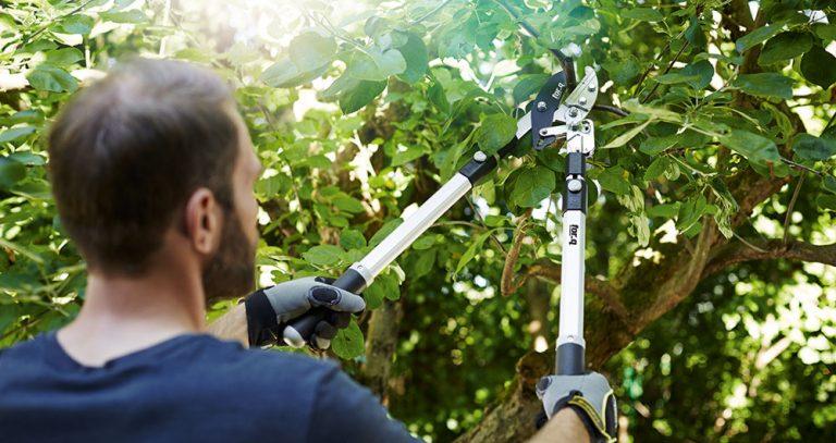 Jak zkrotit stromy a keře na zahradě