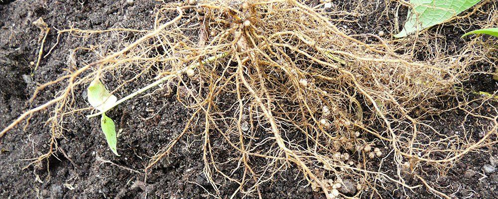 Péče o zahradní půdu nejen na podzim