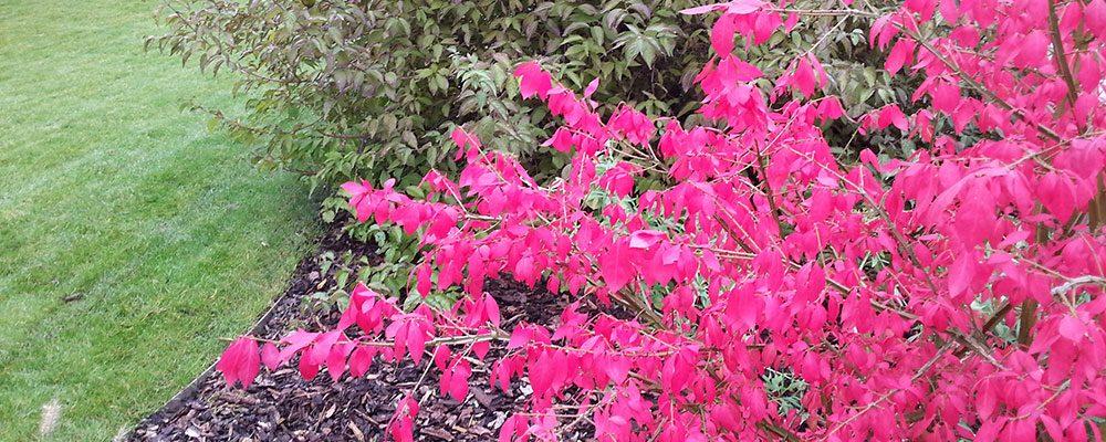Dřeviny, které zaplaví zahradu na podzim barvami