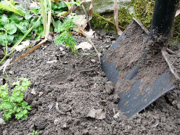Půdu není většinou třeba rýt na hloubku rýče, mnohdy postačí jen povrchové nakypření rycími vidlemi.