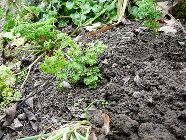 Zdravou půdu poznáte podle drobtovité struktury.