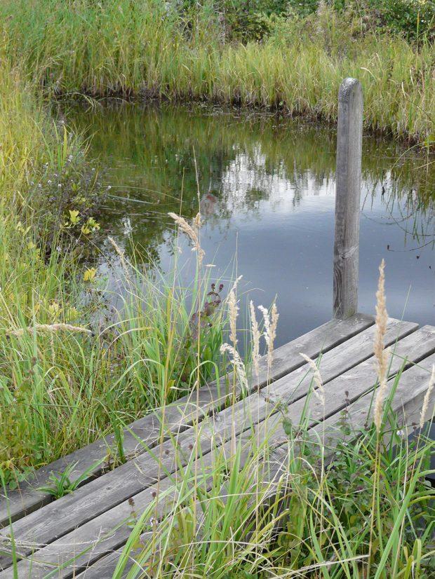 Čistou vodu v jezírku je možné udržet i bez složité jezírkové technologie. foto: Lucie Peukertová