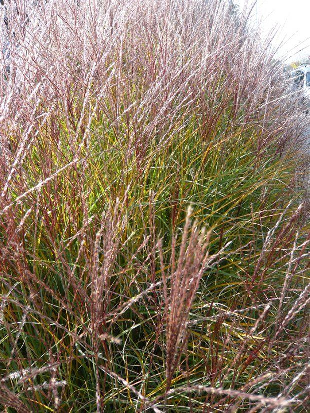 Ne všechny rostliny je nutné na podzim podrobit pečlivému úklidu. Ve výsadbě ponechte například okrasné trávy.