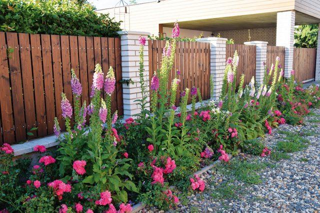 Začlenění plotu pomocí květinové předzahrádky do městského prostředí. FOTO LUCIE PEUKERTOVÁ