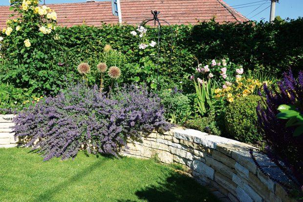 Živý plot nepůsobí tak stroze, pokud je před ním vytvořena květinová kompozice. FOTO LUCIE PEUKERTOVÁ