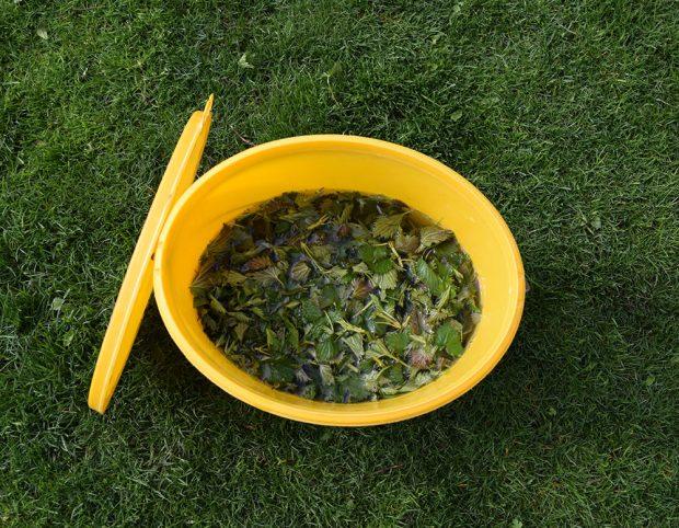 Bylinné jíchy perfektně nahradí hnojiva i postřiky proti některým škůdcům. foto: Lucie Peukertová